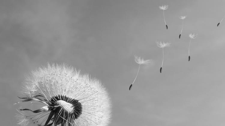 cytatywiatr